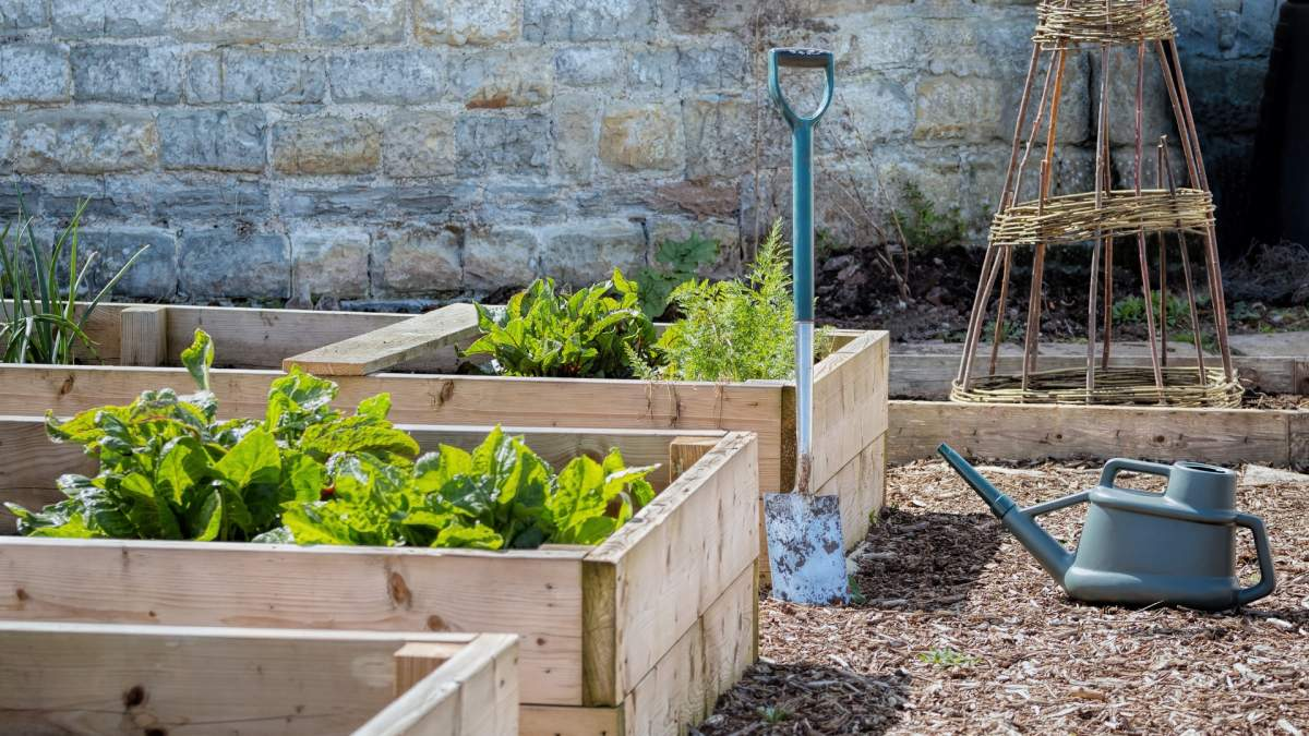 small raised garden boxes with small green plants starting to emerge which represents one of your possible garden goals