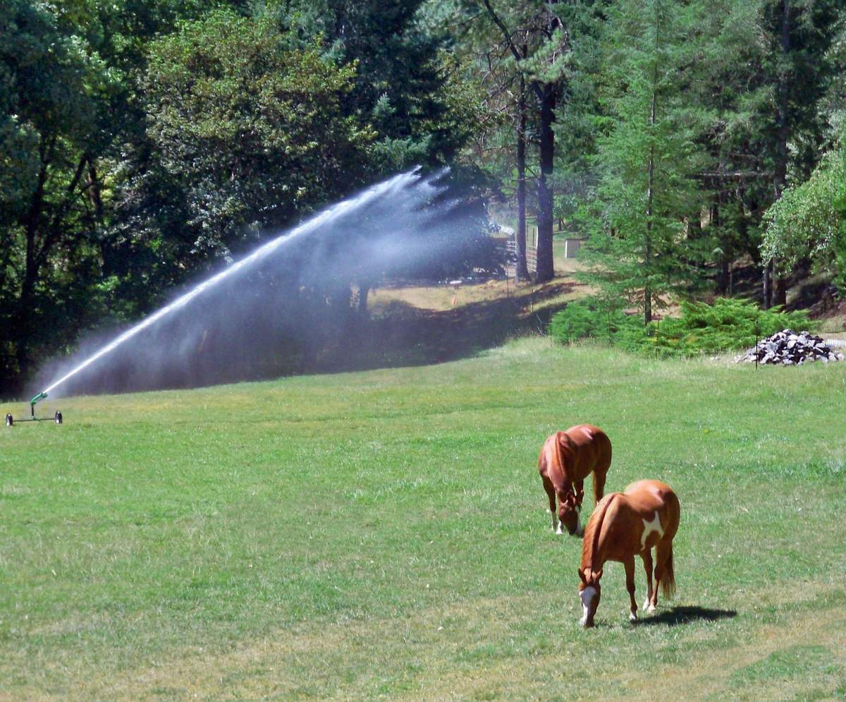sprinkler with horses in field